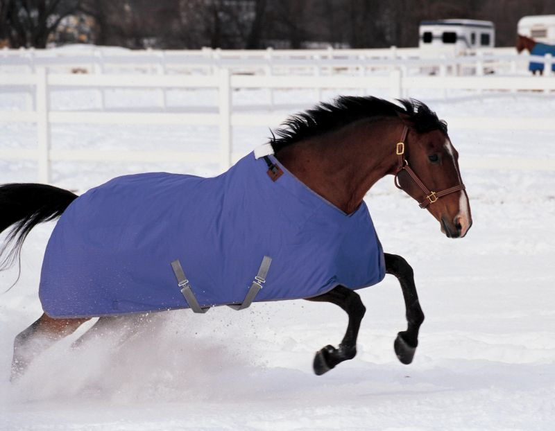 Maintaining Horses Condition Throughout Winter