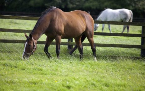 Equine Gastric Ulcer Syndrome (EGUS)